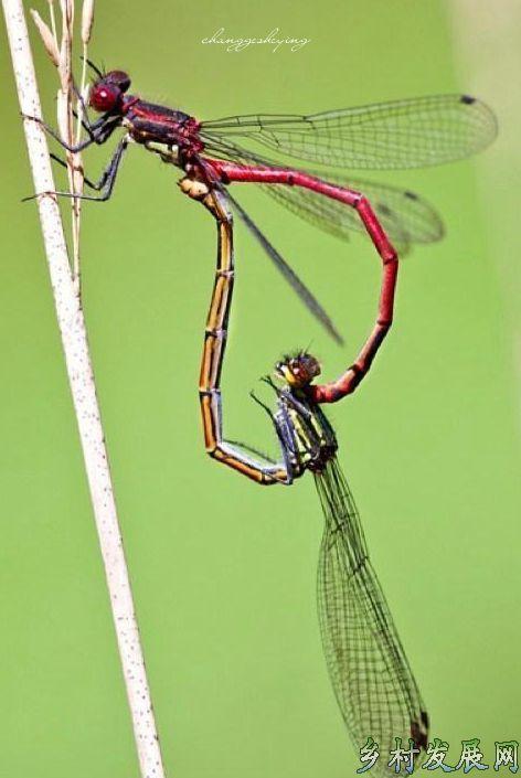 你的肩膀上有蜻蜓吗