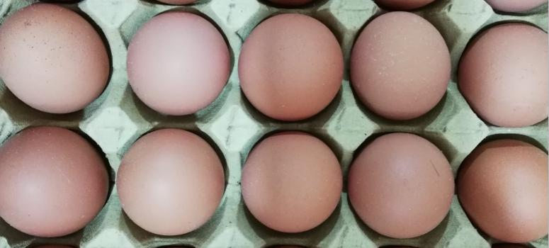 土鸡蛋,耀富土鸡蛋,劲爆拼团,最低才划五角一个!..