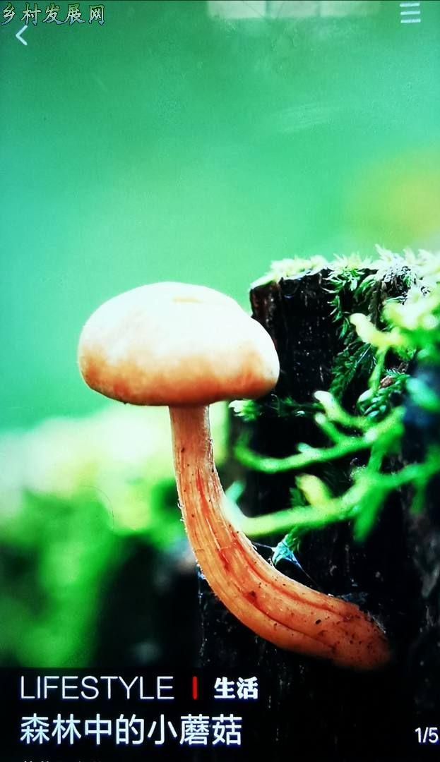 森林中的小蘑菇